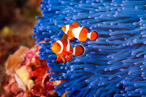 50 Incredible Animal Facts You'll Want to Share | Mental Floss