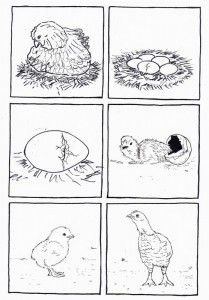 life cycle bird coloring page | thema lente | Pinterest ...