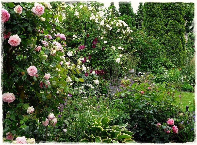 Jahreszeiten im garten fr hsommer mein garten my for Garten 4 jahreszeiten