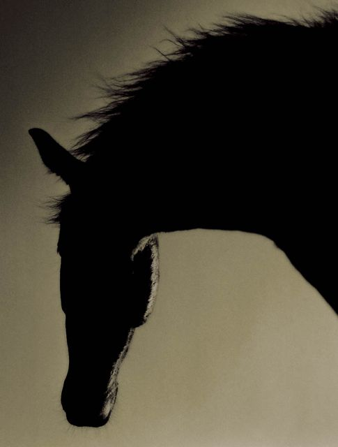 michael eastman horses -