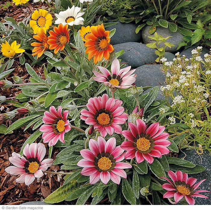 Heat Tolerant Perennials: 4 Drought-tolerant Plants