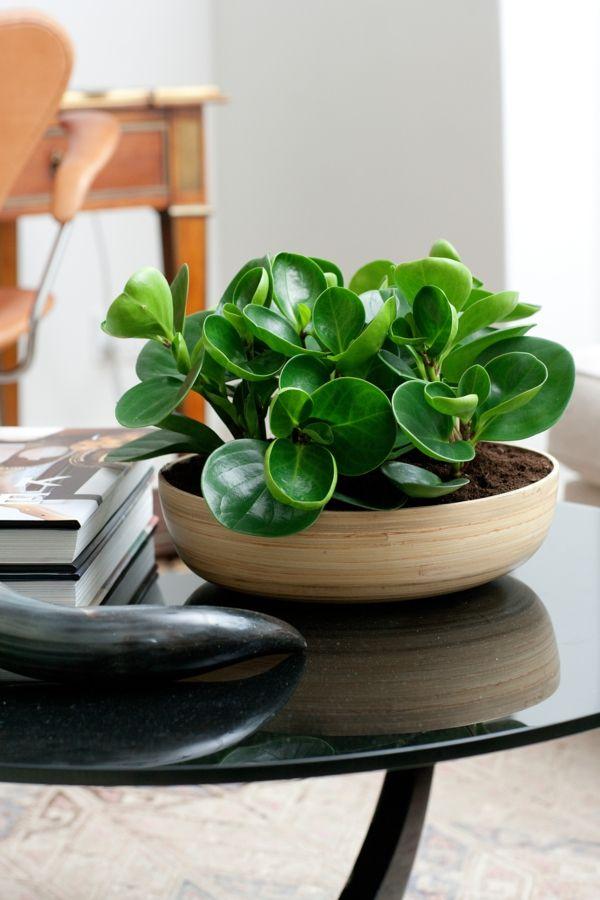 wohnzimmer deko ideen schöne zimmerpflanzen peperomia Wohnung - natur deko wohnzimmer