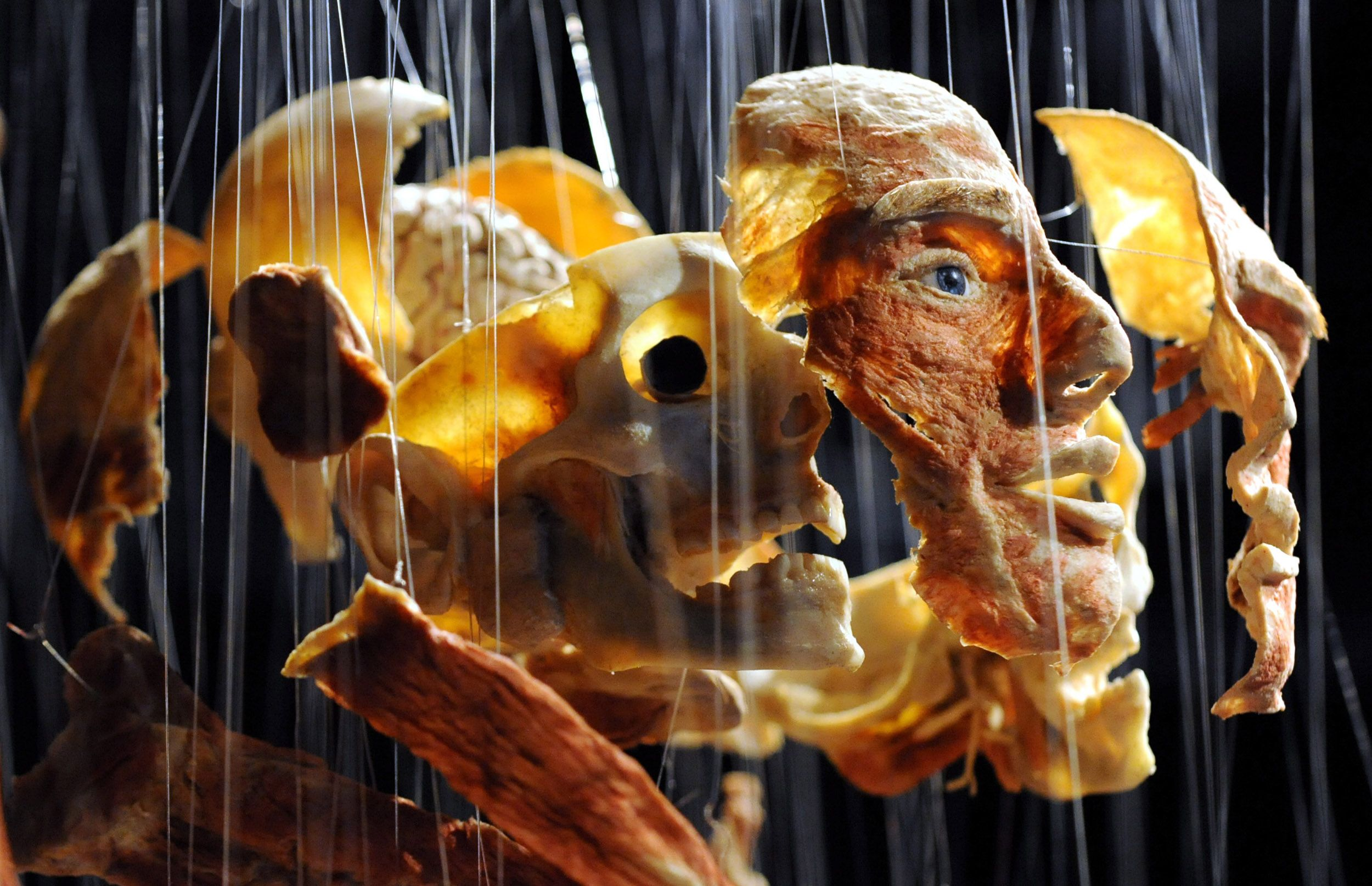 Result Gunther Von Hagens Exhibition 2014 In
