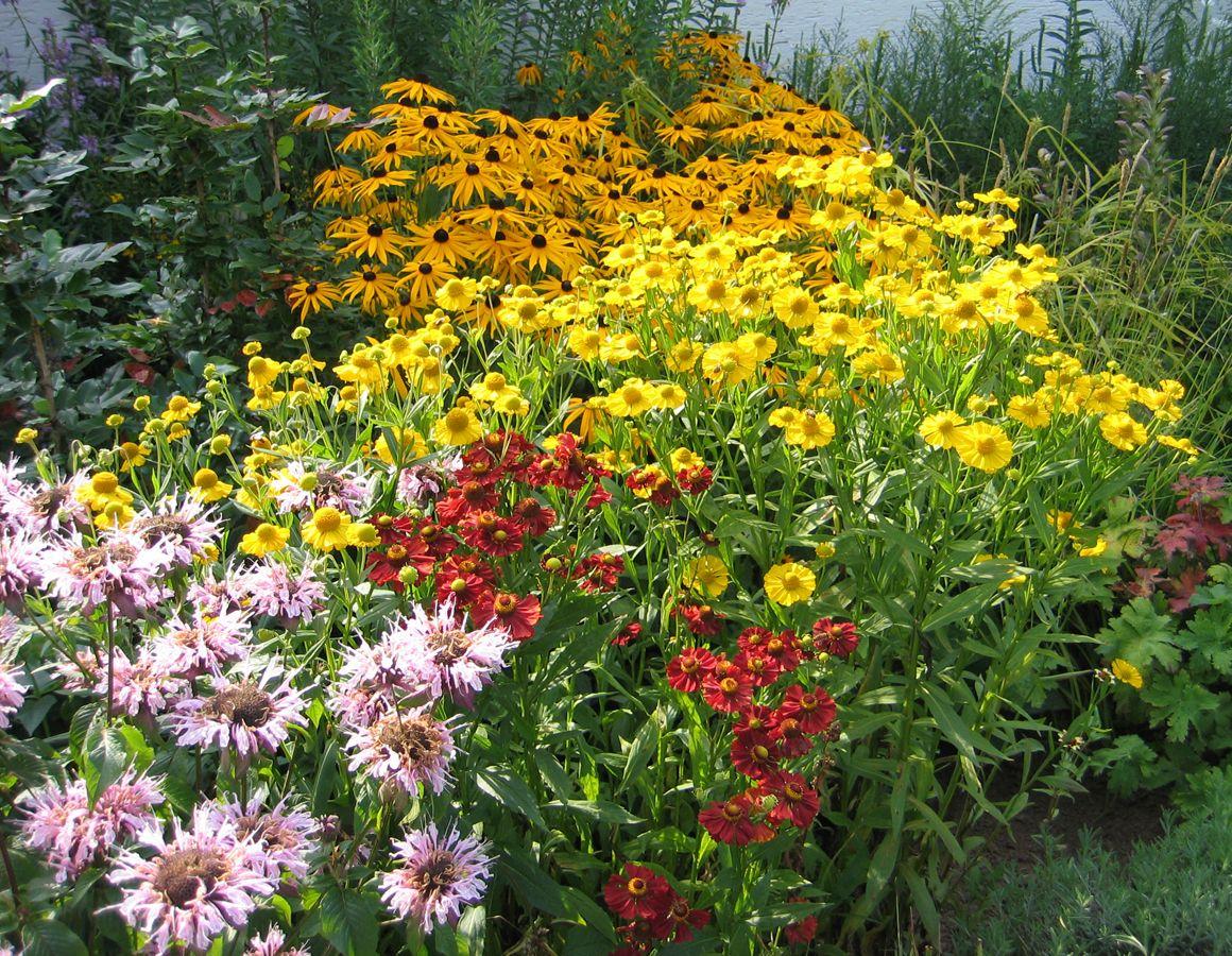 Pin Von Anette Ulbricht Auf Blumen Und Bluten Im Garten Garten Blumen Und Bunt