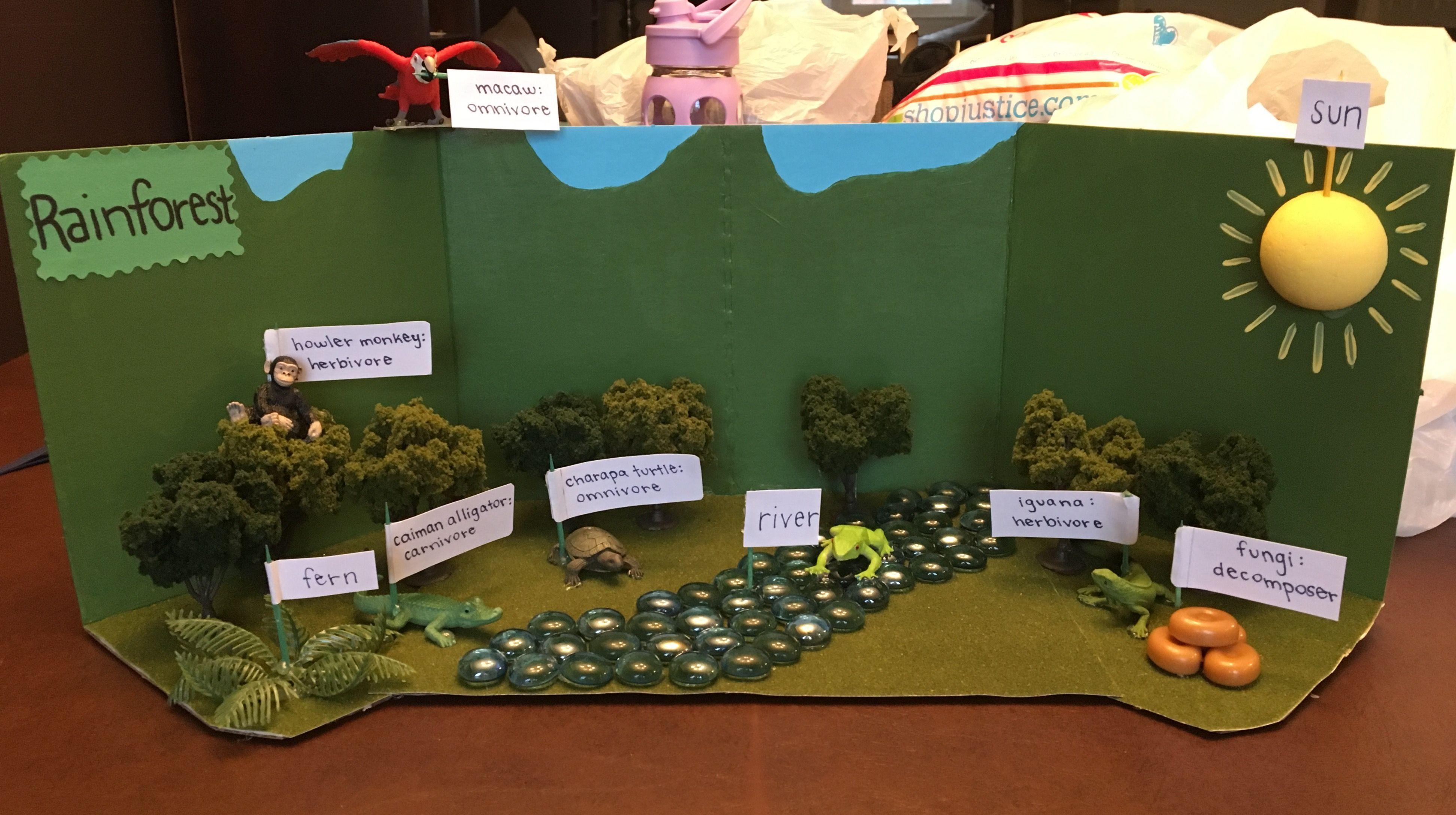 Rainforest Ecosystem Project