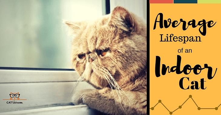 Average Lifespan Of An Indoor Cat Cats Indoor Cat Cat Reading