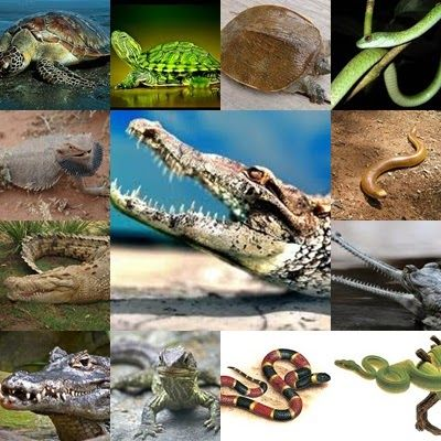 53 Gambar Ciri Ciri Hewan Avertebrata Terbaik