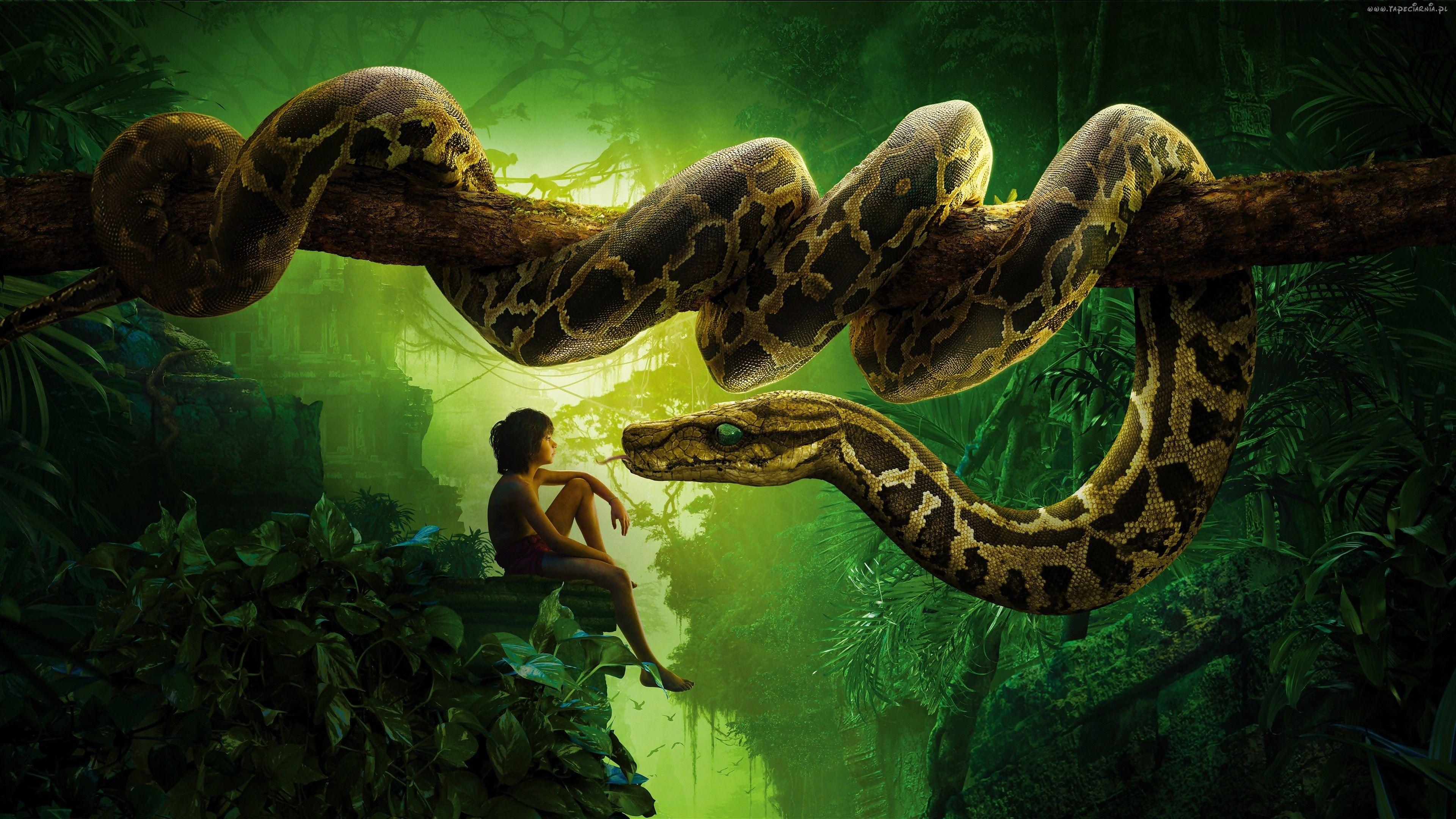 Chłopiec Wąż Skały Księga Dżungli El Libro De La Selva Libro De La Selva Kaa Papel Tapiz De Libros