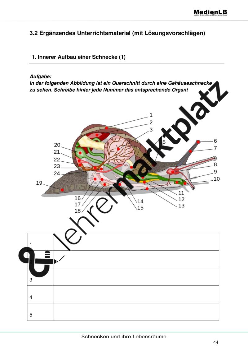 Beste Einführung In Die Anatomie Und Physiologie Arbeitsblatt ...
