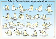 Photo of CONSEJOS DE GUÍA DE SALUD :: I Love Mans Cockatiels