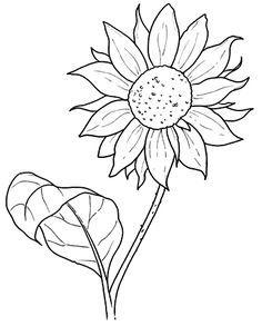 Girasoles Para Pintar Paginas Para Colorear De Flores Paginas