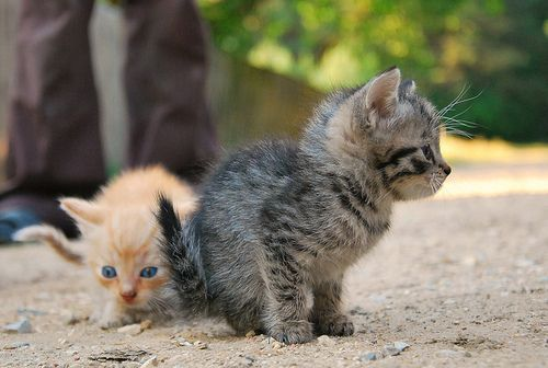 baby kitties!!! these ones look like Daniel and his brother Red!