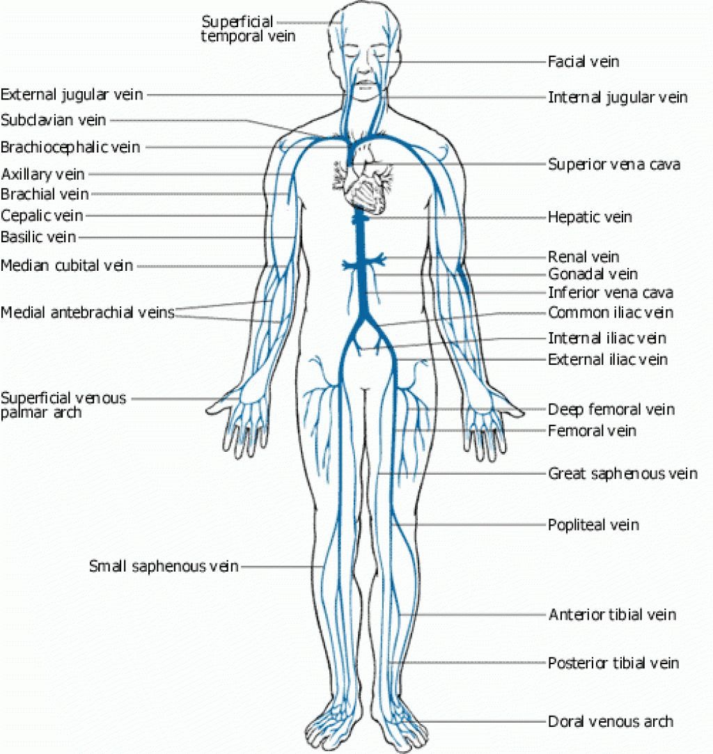 Weak Points Human Body Pressure Points Health Skin Care