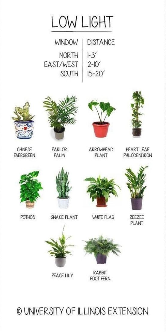 #können #Light #Pflanzen #plants indoor decor #Sie #überall #wachsen Low Light Plants You Can Grow Anywhere Low Light Liebende Pflanzen, die Sie überall wachsen können #howtogrowplants