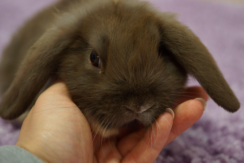 Chocolate Bunnies Chocolate Bunny Bunny Baby Bunnies