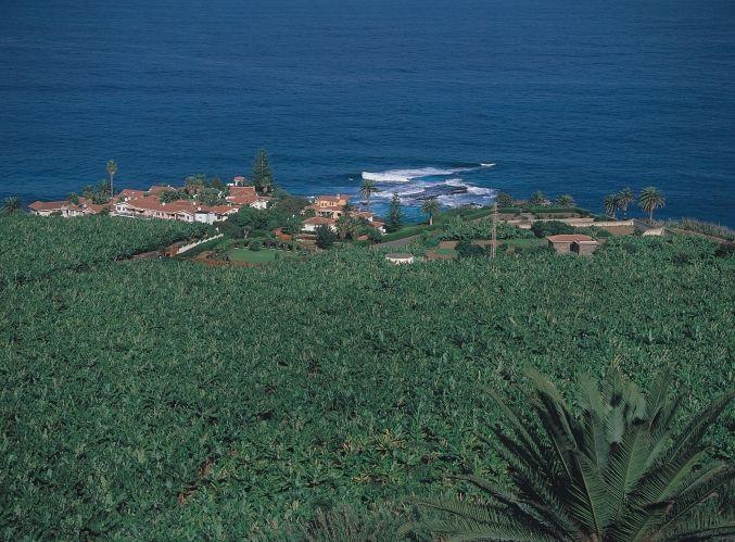Verde que te quiero verde. Así es #Tenerife - foto de Oliviero Daidola