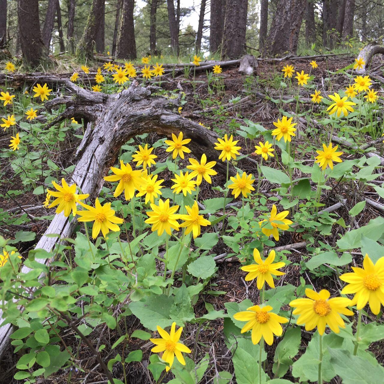 Montana Adventure Hiking Rock Creek Guest Ranch Montana