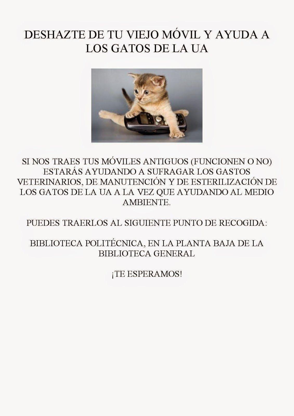Gatos de la Universidad de Alicante: