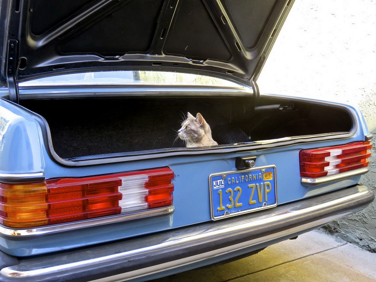 Tastefully-Modded Mercedes 300D In Perfect Condition Could Be Yours 44 Pics | Mercedes benz ...