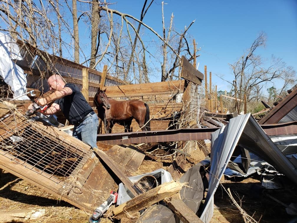 Mare and Foal Trapped for 2 Days After Hurricane Michael