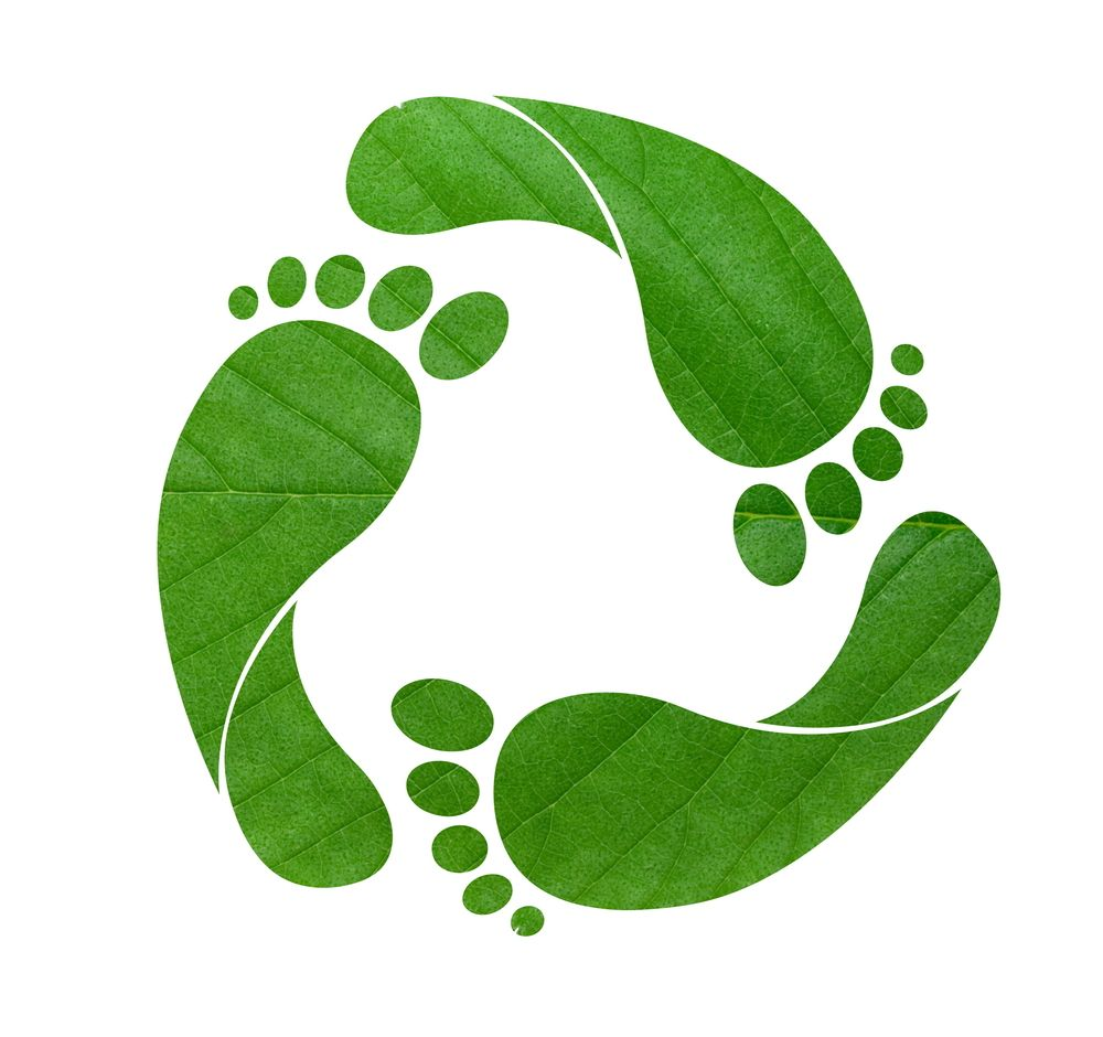 Your Ecological Footprint What Sustainability