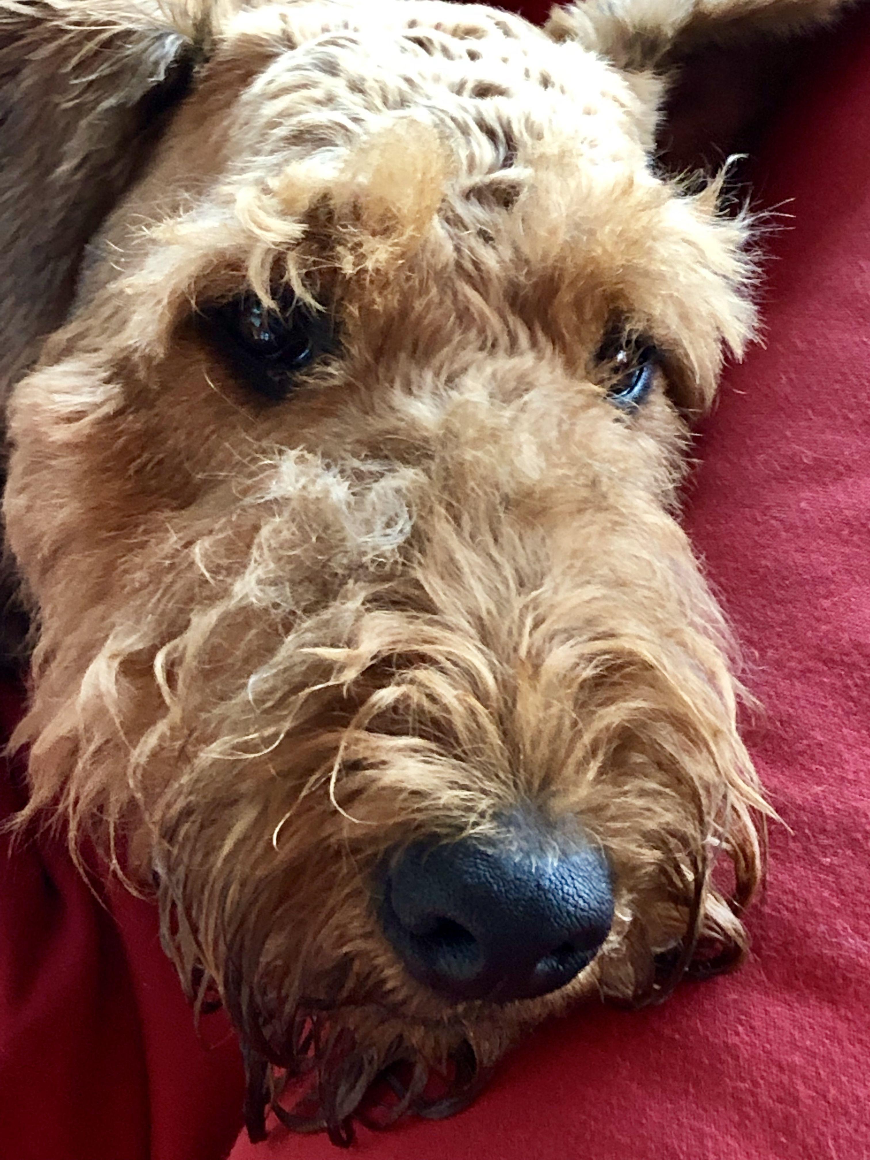 Angelo Hondjes, Honden
