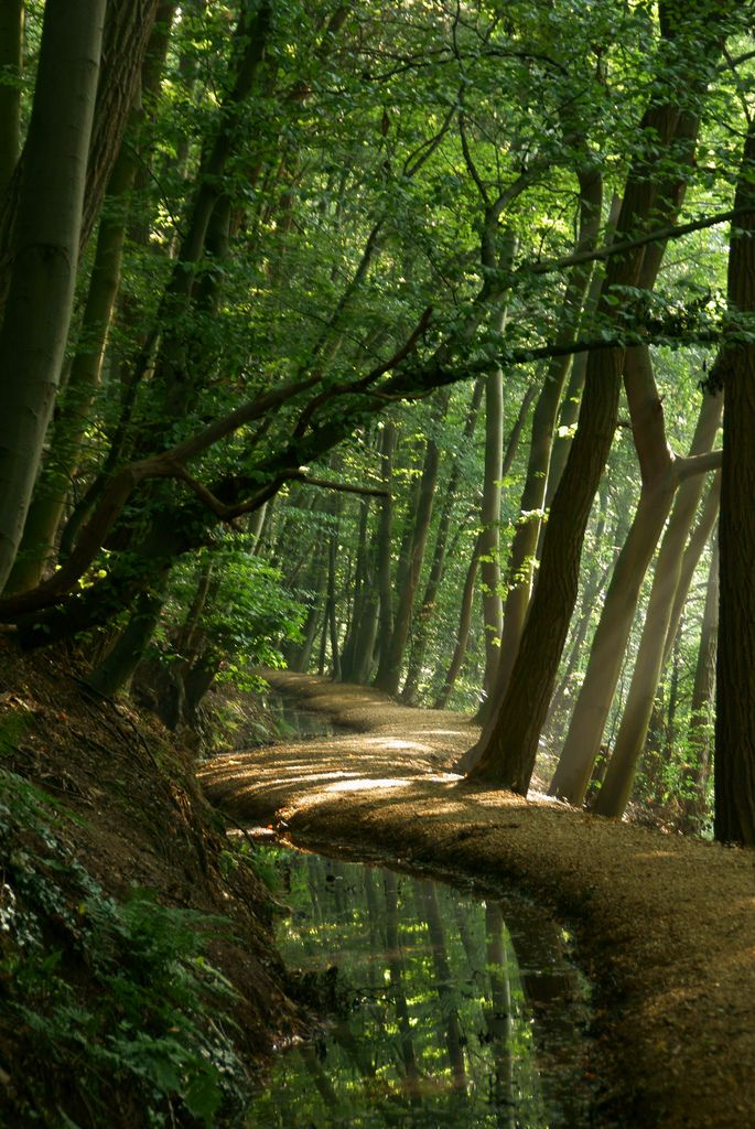 Woodland path magical woods pathway forest trees Pathway images