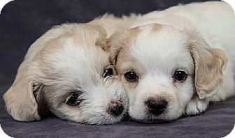 Pin By Erin Terry On Dogs Pets Pet Adoption Adoption
