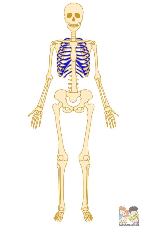 Juego Memory del Esqueleto Humano (descargable)