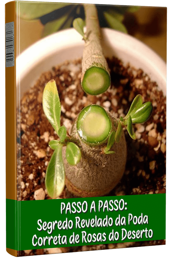 Lançamento Manual Completo Como Cuidar De Rosas Do Deserto M