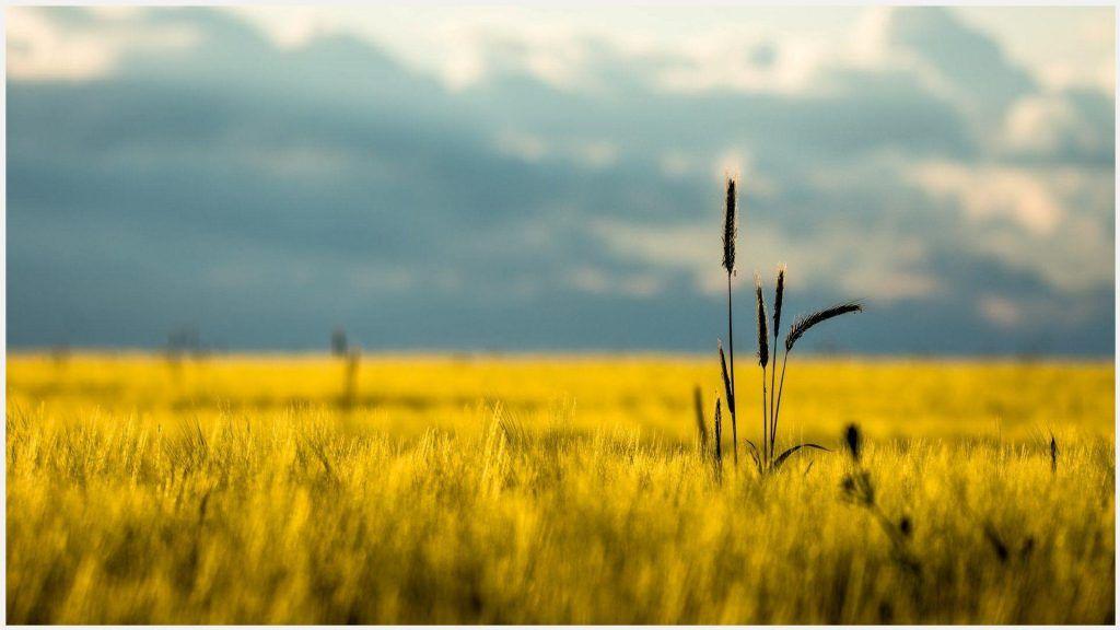 Dry Grass Field Landscape Wallpaper Dry Grass Field Landscape Wallpaper 1080p Dry Grass Field Landscape Wallpaper Desktop Dry Grass Field Landscape Wallpape