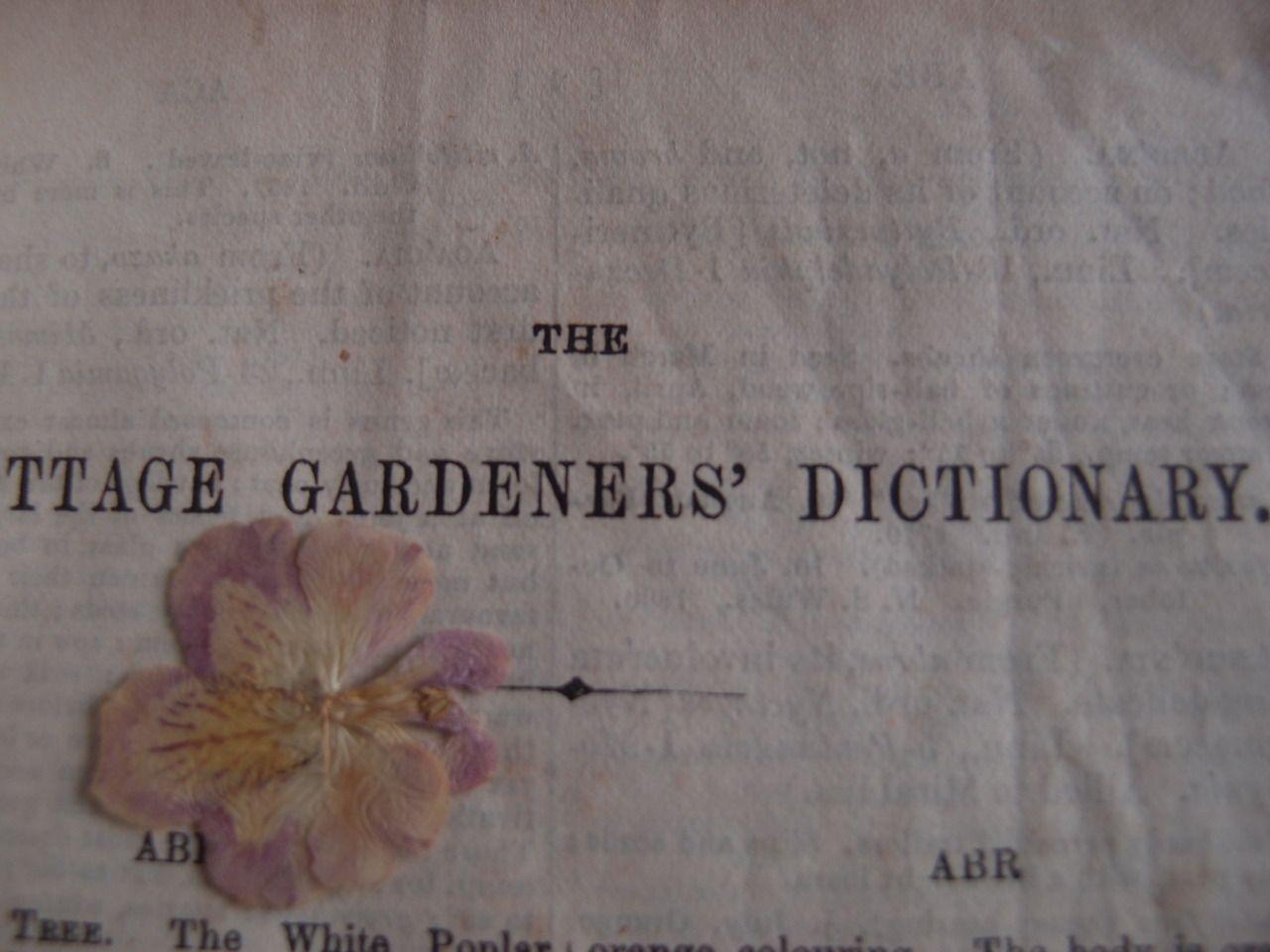 Amélies Little Secrets: Antique books, magic & stardast