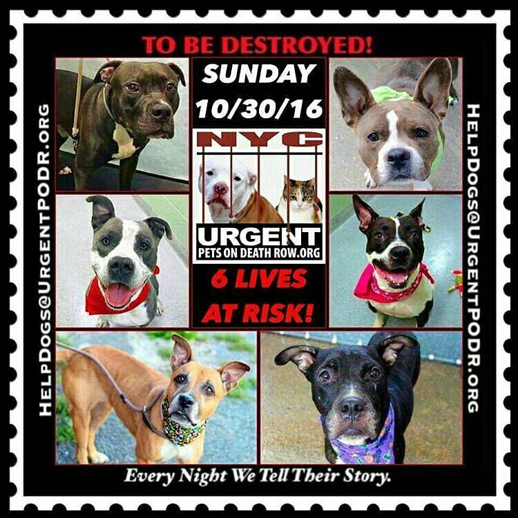 THE NYC ACC KILL LIST FOR SUNDAY 103016🔴🔴 💔💔6 MORE LIVES