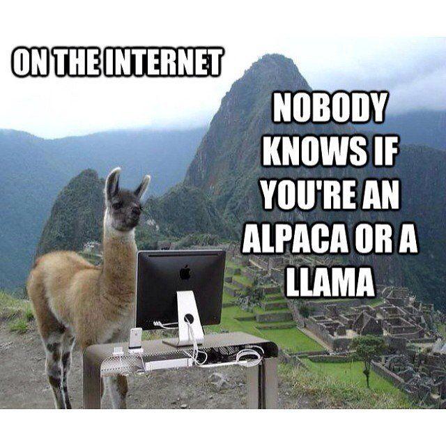 The 9 Funniest Llama Memes Kendrick Llama Llama Del Rey And More Llama Llama Jokes Alpaca Funny