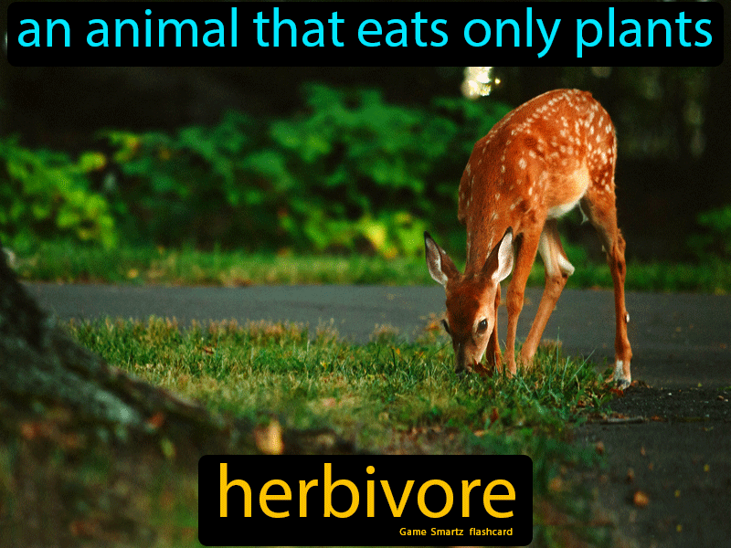 Herbivore in 2020 Science flashcards, Herbivore, Science