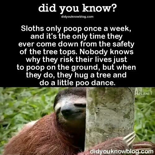 Sloths Only Poops Once A Week Haha Funny Facts Animal Facts Sloth