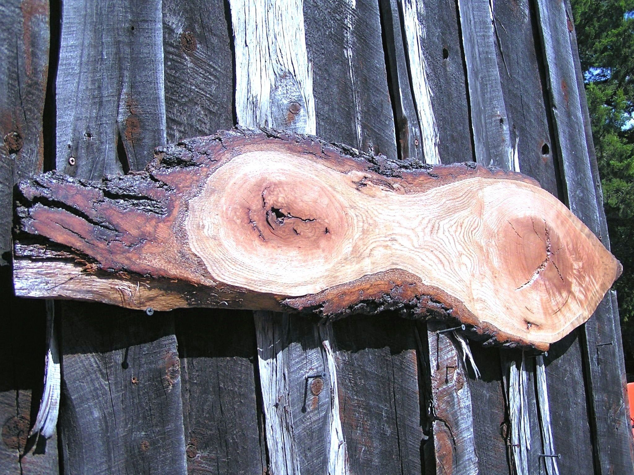 Large Live Edge Double Heart Pecan Wood Slab Tree Slice For Woodworking Sign Wedding Signatures Wall Hang 54 Inches Long 3 4 Thick Pecan Wood Wood Slab Live Edge
