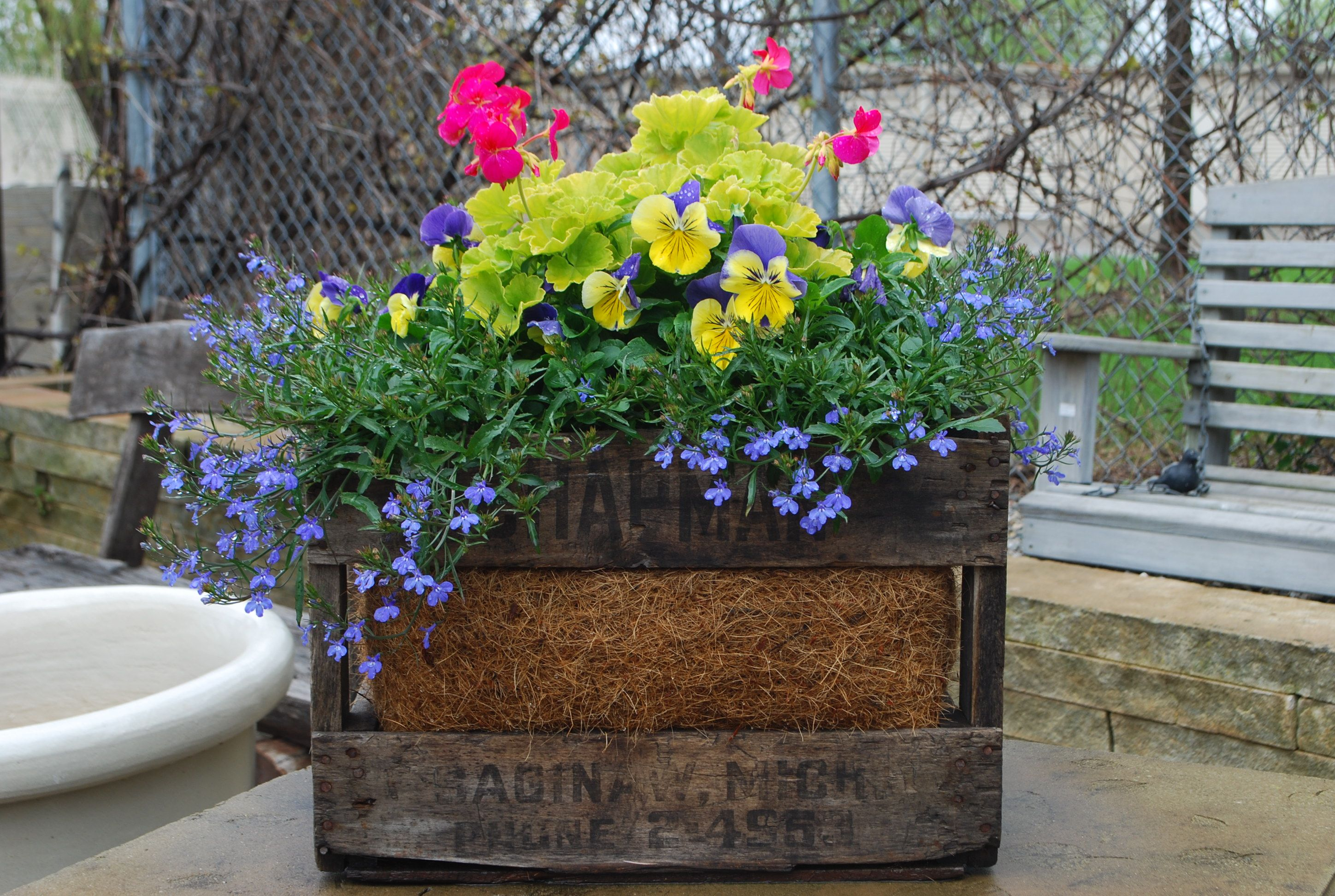 At a glance spring containers dirt simple garden container at a glance spring containers dirt simple mightylinksfo Image collections