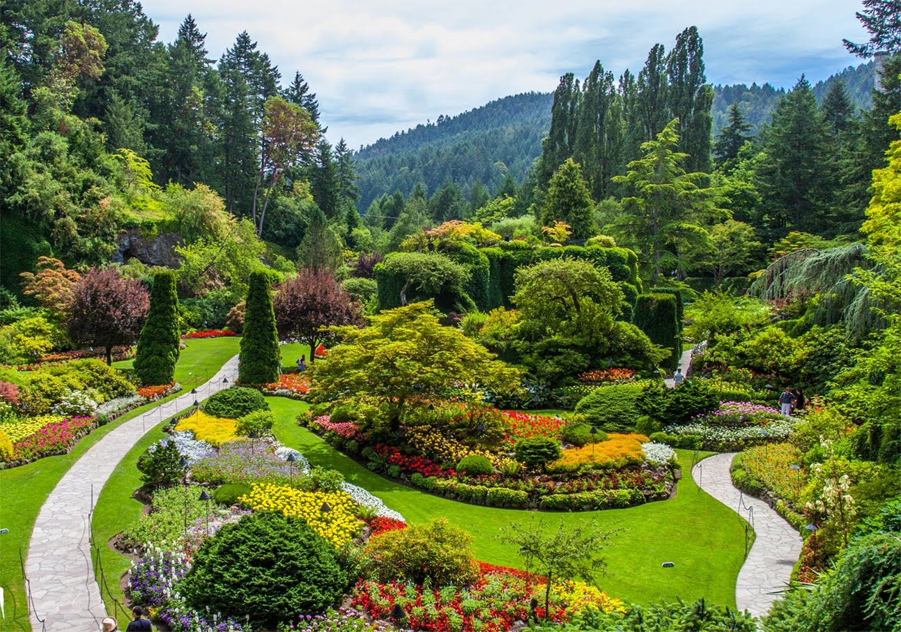 The Butchart Gardens is a group of colorful floral display ...