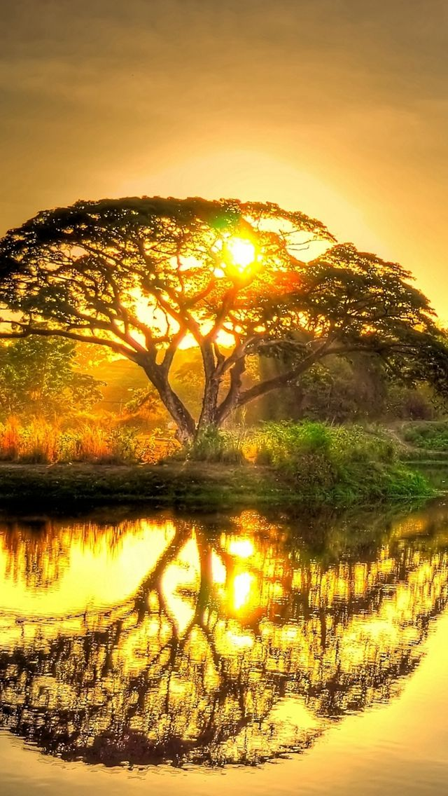 Sunset Pond Trees Landscape #iPhone #5s #wallpaper ...