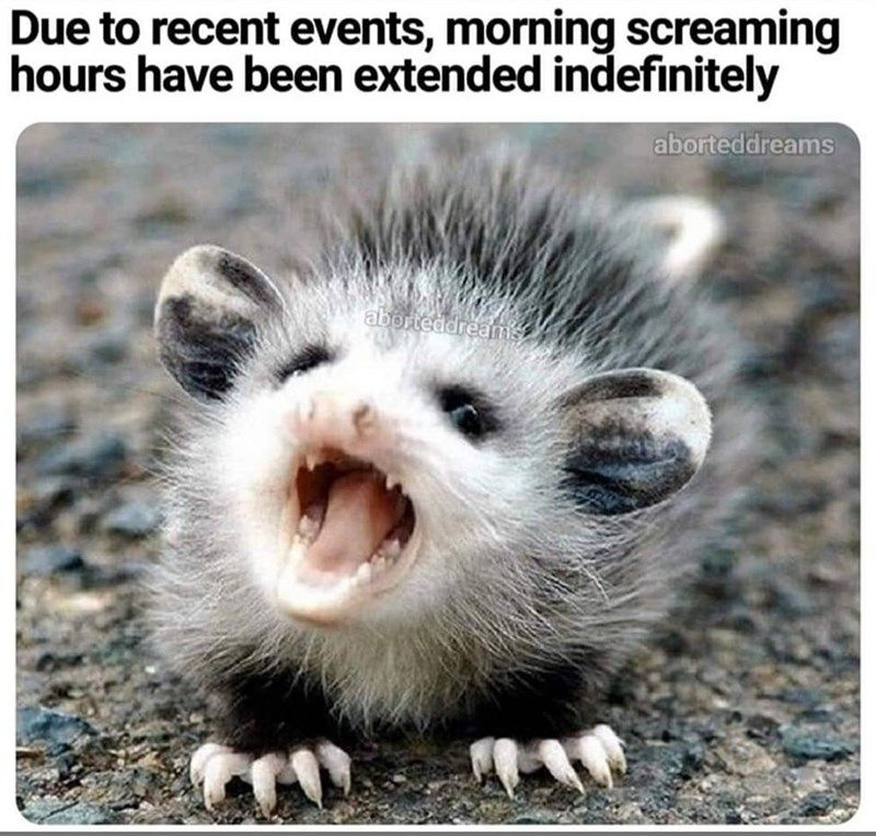 Morning Memes For People Who Are Not Having It Today Cute Animal Memes Animal Memes Animals