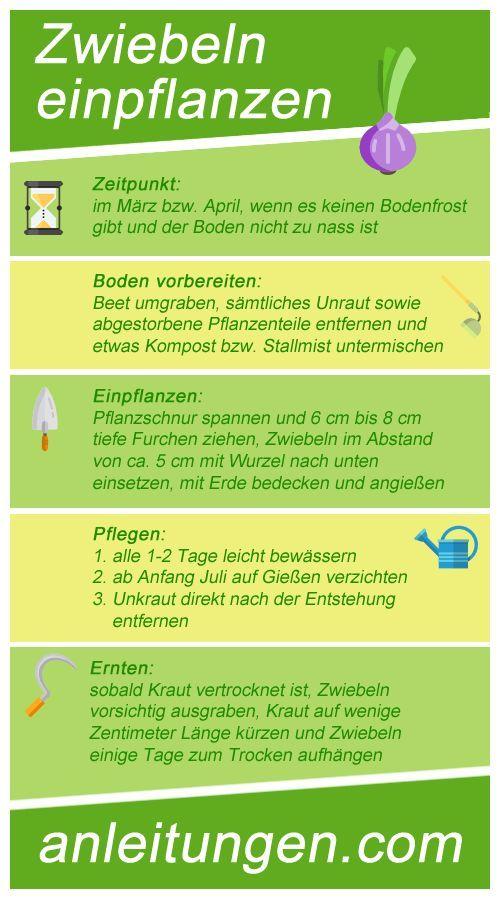 Anleitung: Zwiebeln einpflanzen