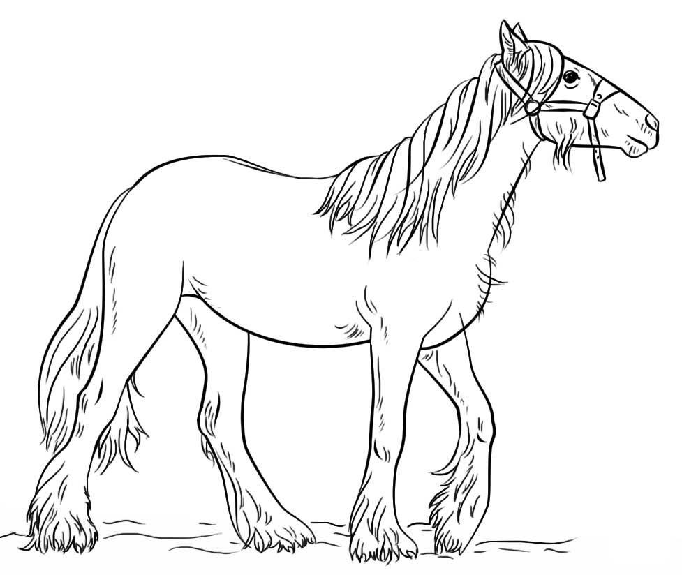 картинки лошади не раскрашенные сети
