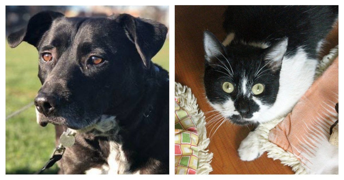Chicago Animal Shelter Pleads For Adopters As They Reach