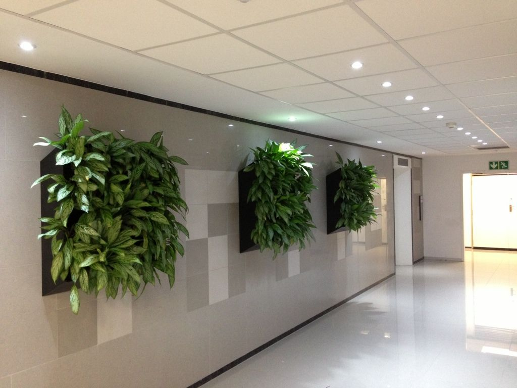 Indoor Plants For The Office Execuflora Plants In The Office And Their Benefits Indoor