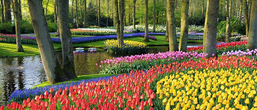 Foto Taman Bunga Hd Wow 4 Taman Bunga Ini Punya Keindahan Yang Menakjubkan Tokopedia Blog Klaten Kini Punya Taman Bunga Bernuansa Taman Bunga Bunga Begonia