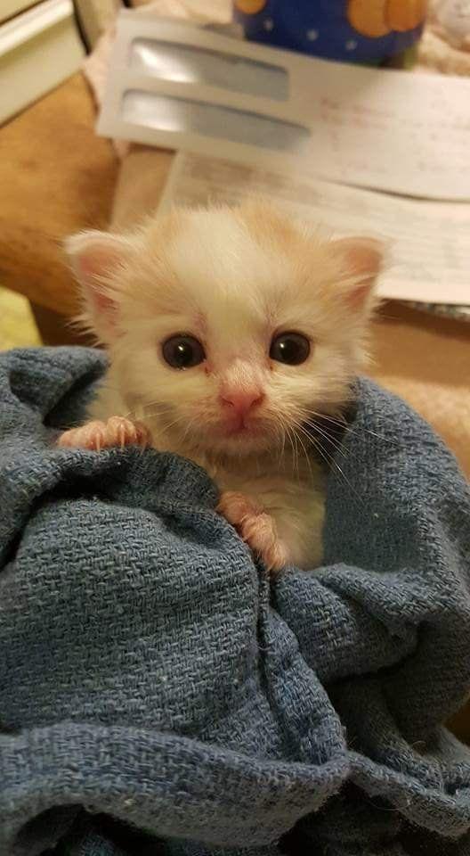My Little Stray Kittens Cutest Cutest Kitten Breeds Kitten Breeds