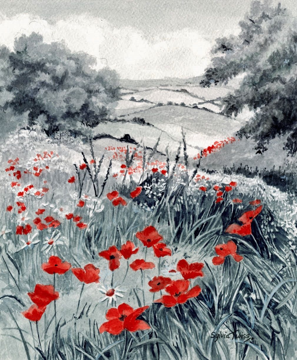 Field of Poppies - Experiment in monochrome with dash of extra colour. A  watercolour by Sylvia Twiss