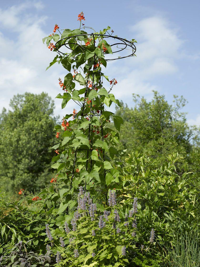 Garden Trellis Essex Umbrella Shaped Tuteur Gardeners Supply