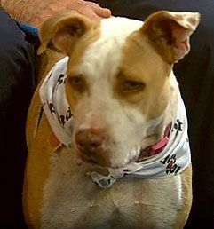 Ron From The Austin Animal Center Introduces Us To Lemon Drop A Shy Dog That Enjoys The Water And Knows A Few A Tricks Http Www Myfoxaust Pets Animals Dogs